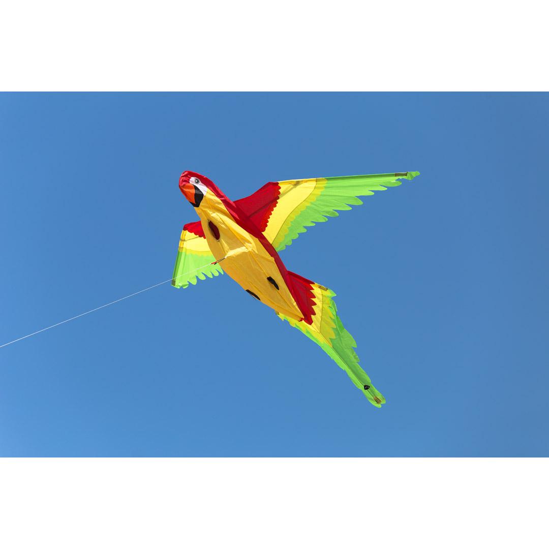 Papoušek 3D drak 118x110 cm